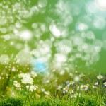 Green grass bacground — Stock Photo