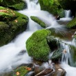 Royalty-Free Stock Photo: Mountain stream in the Ukrainian Carpathians