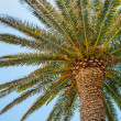 Tropical palm - Stock Photo