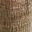 Palm texture - Stockfoto