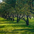 Trees in the row - Stockfoto