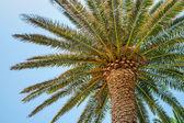 热带棕榈 — 图库照片