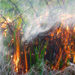Stock Photo: Fire nature