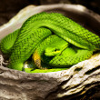 Stock Photo: Snake green