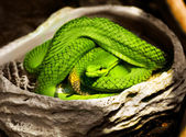 Snake green — Stock Photo