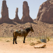 Stock Photo: Horse. Monument Valley
