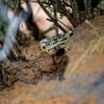 Snake at desert — Stock Photo