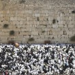Stock Photo: Blessing Cohen at Western Wall in Sukkot holiday in Jeru