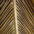 Dried palm leaf — Stock Photo