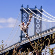 Manhattan Bridge. New York — Stock Photo