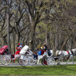 Stock Photo: Central Park, New York.