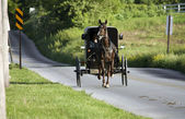 Horse with the carrige running to the village — Stock Photo