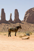 Horse. Monument Valley — Stock Photo
