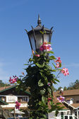 Street lantern with flower ivy — Stock Photo