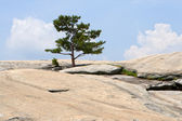 Top of Stone Mountain, Atlanta, Georgia. — Stock Photo