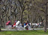 Central Park, New York. — Stock Photo