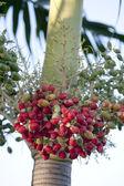 水果日期 — 图库照片
