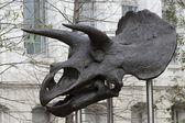 Stock Photo: Dinosaur skull. National museum of natural history. — Foto Stock