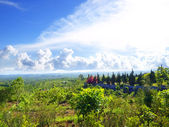 Bali landscape — Stock Photo