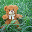 Plush Teddy Bear toy — Stock Photo