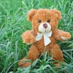 Plush Teddy Bear toy — Stock Photo