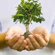 Plant in hands — Stock Photo #11143668