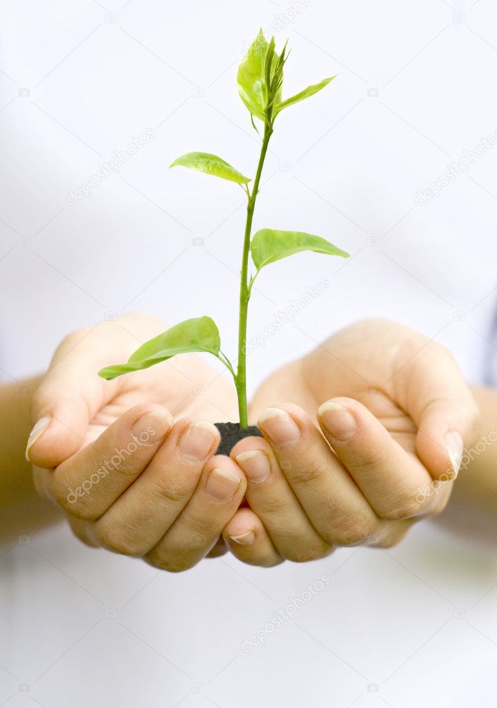 Plant in woman hands  Stock Photo #11142785