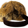 Earmuff — Stock Photo
