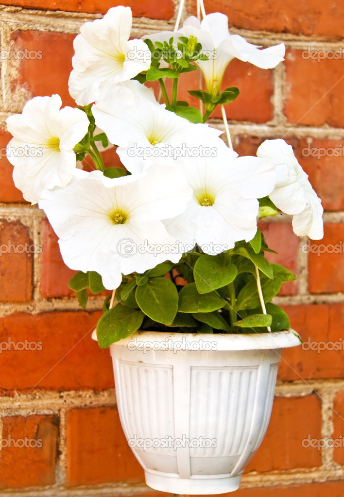 Flover in pot on wall  Stock Photo #11150538