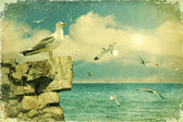 Seagulls in the sky.Vintage nature seascape background — Stock Photo