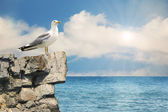 Seagull sitting on a rock.Nature seascape background — Stock Photo