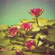 Pink waterlilies in pond .Vintage flowers card on old paper back — Stock Photo #11797049