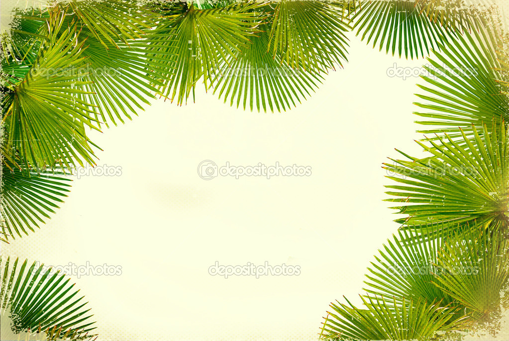 Tropical green palms on white vintage background for text — Stock Photo #11793759