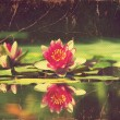Stock Photo: Waterlily in pond .Vintage flowers card on old paper