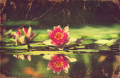 Waterlily in pond .Vintage flowers card on old paper — Stock Photo