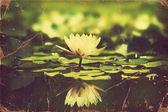 Nenúfar en tarjeta del estanque .vintage flores — Foto de Stock