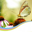 NAture card with decor background.Butterfly on flower — Stock Photo