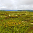 Stock Photo: Rondane Norway