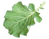 Fresh green cabbage leaf — Stock Photo