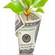 Light bulb with dollar and green sprout — Stock Photo