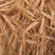 Texture of wheat ears — Stock Photo
