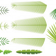 Set of palm leaves — Stock Vector #10821981