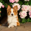 Dog in flowers - Stock Photo