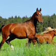Horse and pony - Stock Photo