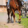 Western horse riding — Stock Photo
