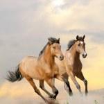 Horses in dust — Stock Photo #11680686