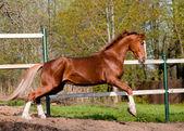 Kůň hraje — Stock fotografie
