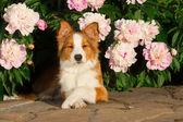 Chien en fleurs — Photo