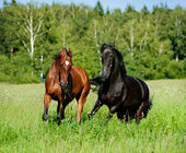 Horses play — Stock Photo