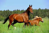 Horse and pony — Stock Photo